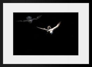 PHOTOBAY - sortir de l'ombre - Photographie