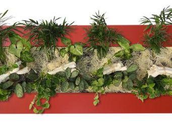 WALLFLOWER -  - Tableau Végétal