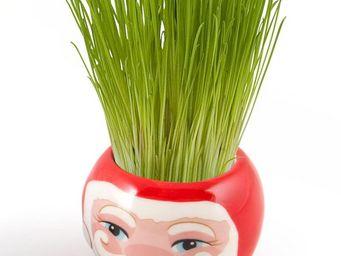 Radis Et Capucine - le père-noël plein de vitalité et son herbe à pous - Potager D'intérieur