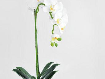 NestyHome - orchidée phalaenopsis - Fleur Artificielle