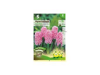 LES DOIGTS VERTS - bulbe jacinthe anne marie x5 - Bulbes De Fleurs