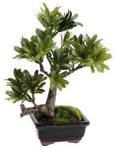 Amadeus - bonsaï podocarpus 23cm - Fleur Artificielle