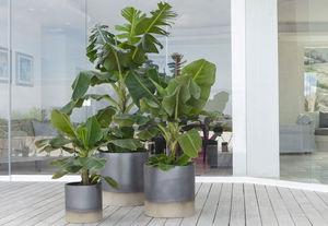 POT À PORTER - palm beach - Pot De Jardin