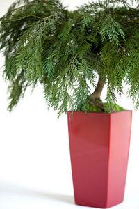 Meamea - bonsaï stabilisé thuya - pièce unique - Bonsaï