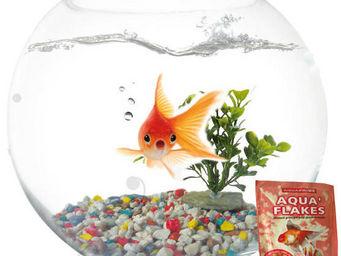 AGROBIOTHERS - kit aquarium aquaboule en verre 6 litres - Aquarium