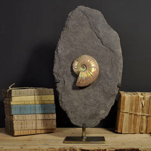 Objet de Curiosite - ammonite nacr�e de madagascar sur gangue - Fossile