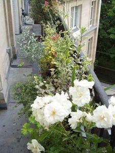 JARDIN EN CAPITALE - balcon  - Terrasse Aménagée
