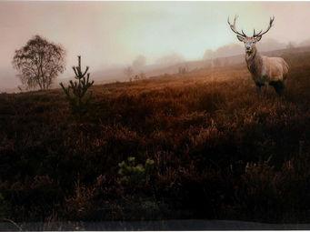 Amadeus - tableau verre paysage et renne - Tableau Décoratif