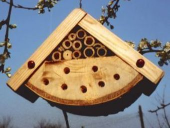 Wildlife world - bug box (insect habitat) - Insecte