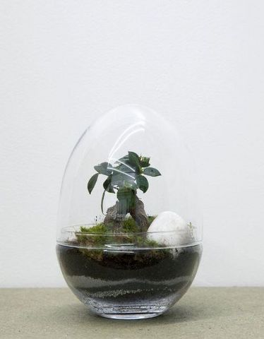 GREEN FACTORY - Terrarium Jardin sous cloche-GREEN FACTORY-JURASSIC LAB LARGE