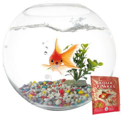 AGROBIOTHERS - Aquarium-AGROBIOTHERS-Kit Aquarium Aquaboule en verre 6 litres