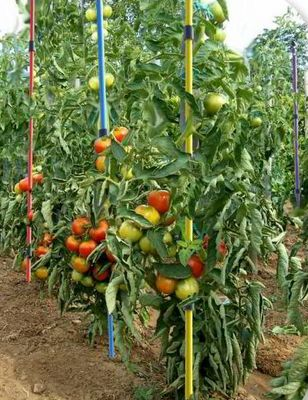 T'ENREV - Tuteur � tomates-T'ENREV