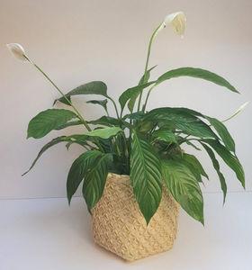 ROTIN ET OSIER - palmyral - Plant Pot Cover