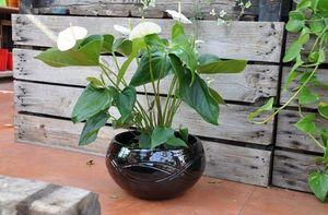 Les Poteries Clair de Terre - -yin yang'' - Flower Pot