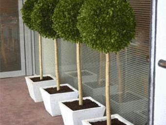 Hortus Verde - signalétique boulier - Indoor Topiary