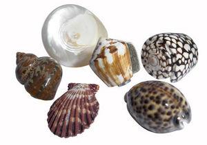 L'Univers de La Poignee - boutons coquillages de 9 à 16 euros. - Furniture Knob