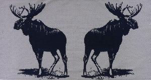 NEOLICE - orein e1 - Modern Tapestry