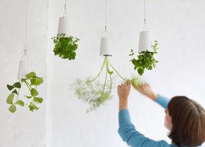 BOSKKE -  - Hanging Basket