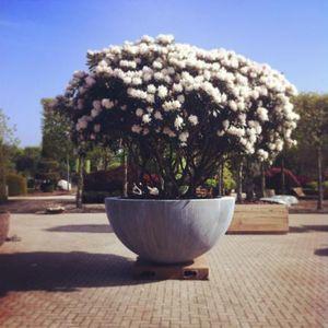 DOMANI -  - Tree Pot