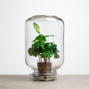PIKAPLANT -  - Glass Dome