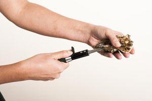 NOVAC -  - Oyster Knife