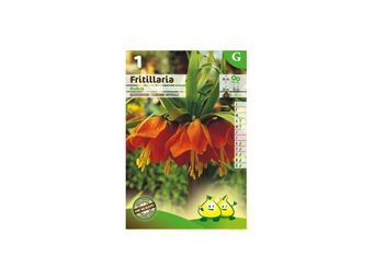 LES DOIGTS VERTS - bulbe fritillaria couronne imperiale x1 - Seed