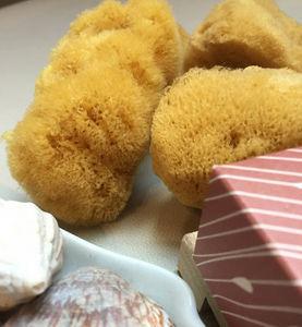 OHËPO - frimousse - Sponge