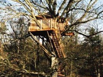 La Cabane Perchee -  - Treehouse