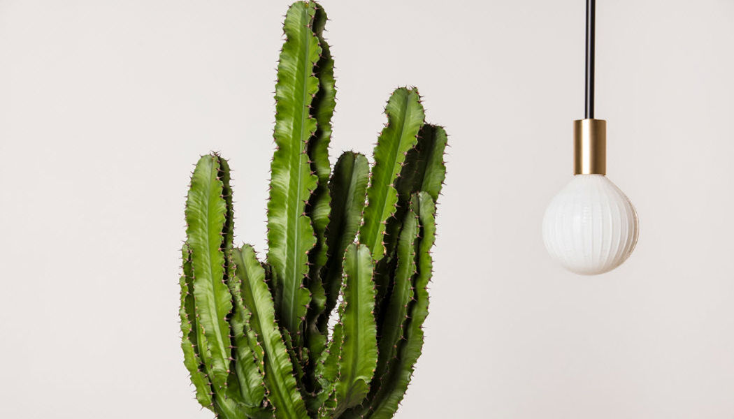 NEXEL EDITION Deckenlampe Hängelampe Kronleuchter und Hängelampen Innenbeleuchtung  |