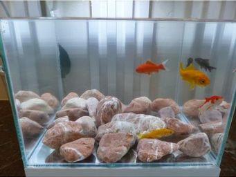 CLASSGARDEN - galet rouge aquarium 40-60 mm - Brunnen Aquarium