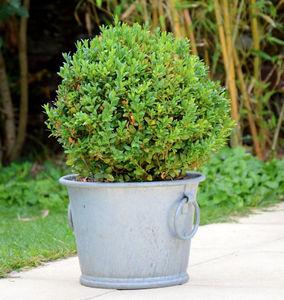 ZINC ET JARDIN -  - Garten Blumentopf