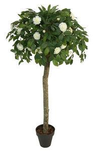 CONCORAL - camelia crema - Künstlicher Baum