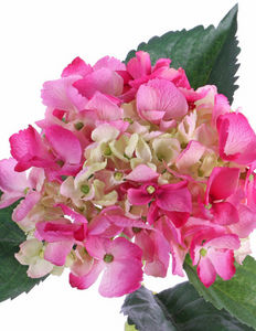 Top Art International - hortensia - Kunstblume