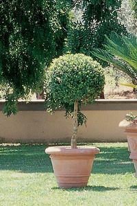 Enzo Zago -  - Garten Blumentopf