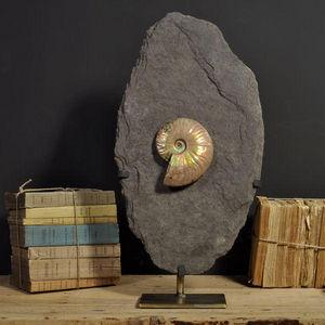 Objet de Curiosite - ammonite nacrée de madagascar sur gangue - Fossilie