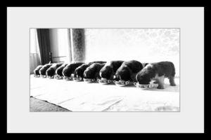 PHOTOBAY - saint bernard puppies - Fotografía