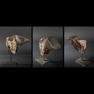 Expertissim - dent de mammouth fossilisée - Fósil