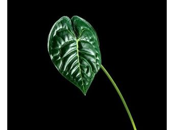 Deco Factory - Feuille Artificielle D'anthurium - Follaje