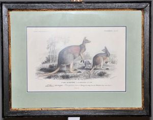 Demeure et Jardin - gravure kangourou - Grabado