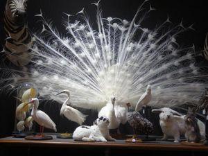 Design Et Nature -  - Animal Disecado