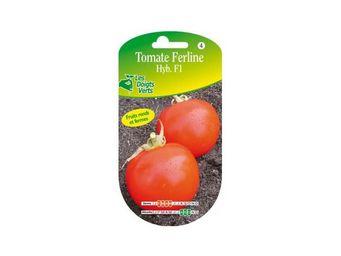 LES DOIGTS VERTS - semence tomate ferline - Semilla