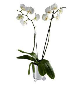 Maceta para flores