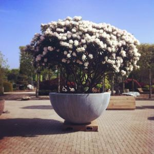 DOMANI -  - Vaso Per Albero